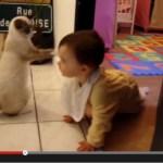 猫による「猫だまし」が観測される(動画)