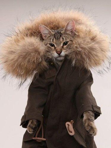 131207coatcat - 自前の毛皮より暖かそうな、ファー付きの猫用コート