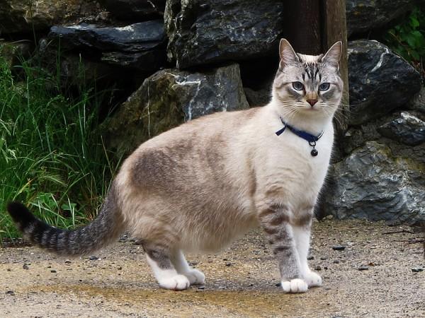 131212cat 600x450 - 本日の美人猫vol.51