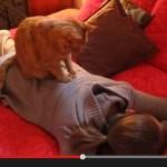お姉さんの背中に乗った猫、黙々と肉球で指圧を施術(動画)