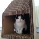 爪とぎ機能付きの、段ボール製猫ハウス「KRABHUIS」
