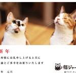 猫年賀状写真コンテスト2014、応募締切は1月14日まで
