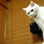 猫が棚から物を落とす気分が分かるゲーム「CATLATERAL DAMAGE」