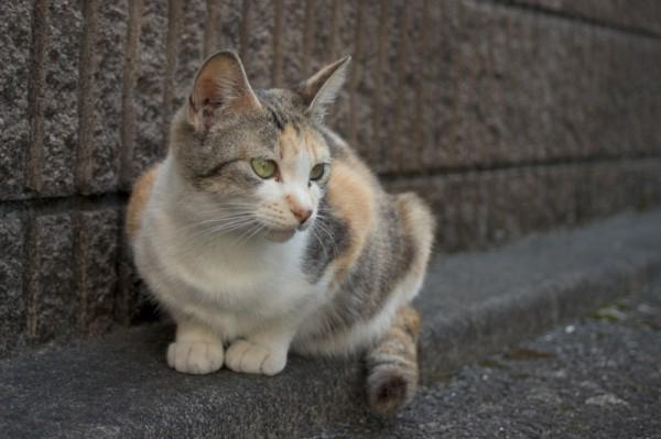 140126cat sozaing 600x399 - 無料で商用利用可能な、猫写真素材提供サイトまとめ