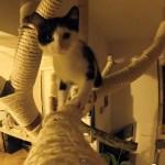 ハイレベルなDIYキャットツリー、制作中から猫まっしぐら