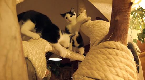140203DIYCatTree02 - ハイレベルなDIYキャットツリー、制作中から猫まっしぐら