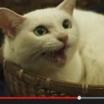 白猫の玉之丞さまが主演する、劇場版「猫侍」の予告編がYouTubeで公開