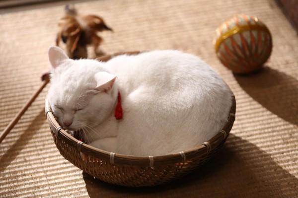 140203nekozamuraimovie03 600x399 - 白猫の玉之丞さまが主演する、劇場版「猫侍」の予告編がYouTubeで公開