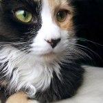 本日の美人猫vol.62