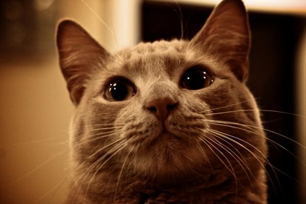 140213cat 600x400 - 本日の美人猫vol.63