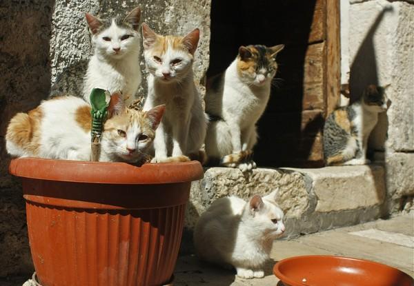 140222catday01 600x415 - 2014年も2/22は猫の日祭り!ネット各所の猫祭りまとめ(追記あり)