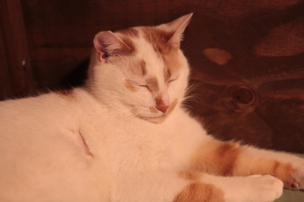 140301necoRepublicIMG 1505 600x399 - 岐阜の猫カフェで始まる、ビジネスと猫保護活動の素敵な関係