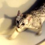 本気度の高い猫ホイールをDIYするも、猫の反応はいまいち