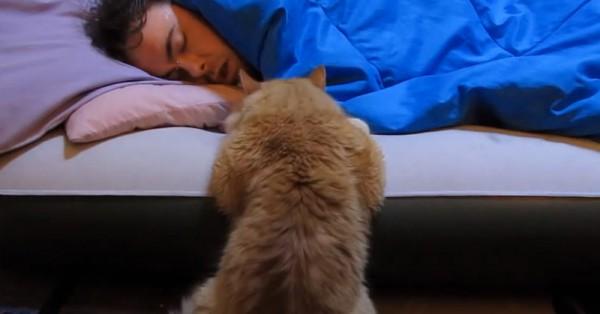 140321cat 600x314 - 飼い主の起床を待つ猫、実力行使せずにじっと見守る