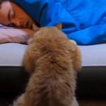 飼い主の起床を待つ猫、実力行使せずにじっと見守る