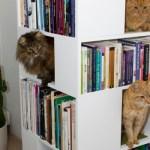 キャットタワー機能付き本棚、本を取る手が猫に伸びそう