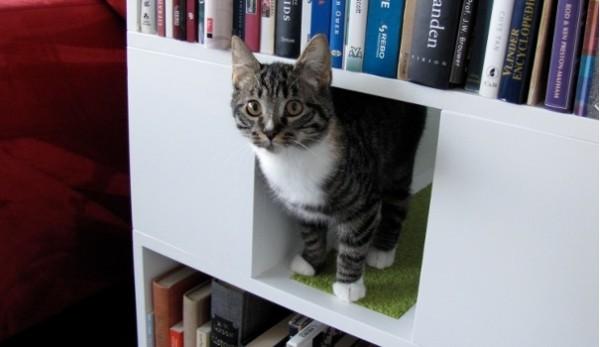 140326catbookshelf02 600x347 - キャットタワー機能付き本棚、本を取る手が猫に伸びそう