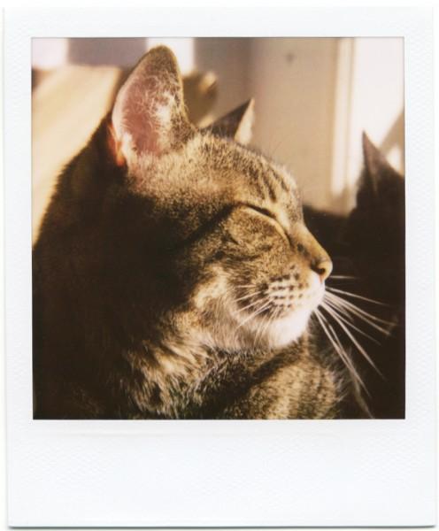 1404016catphoto 496x600 - 松濤美術館の「ねこ・猫・ネコ」展、飼い猫のプリント写真持参で2割引に