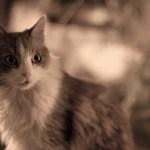 本日の美人猫vol.71