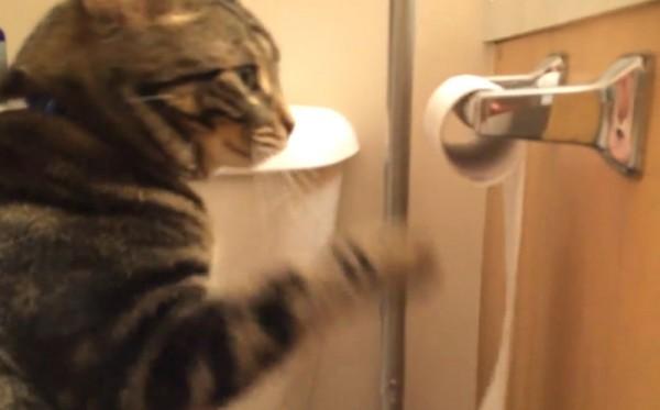 140408roolbuckupcat 600x373 - トイレットペーパーを回す猫、完全犯罪をほぼ達成する