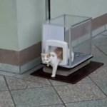 慎重派の茶白猫、2階のベランダから専用エレベーターで地上へ