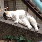 谷根千の猫をひたすら撮り続けるブログ