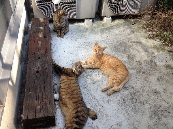 140523yanesencat02 - 谷根千の猫をひたすら撮り続けるブログ