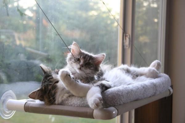 140525catperch01 600x400 - 吸盤で窓に付けられる猫ベッド「Cat Perch」
