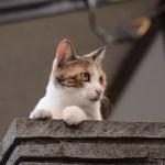 本日の美人猫vol.81