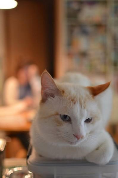 140608omochi 397x600 - 本日の美人猫vol.83