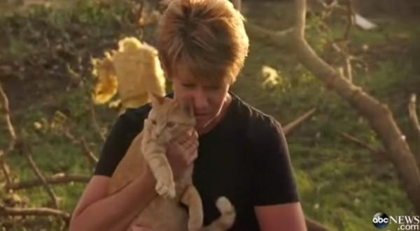 140624survivecat 600x330 - 竜巻を生き延びた茶猫、瓦礫の中からひょっこり飼い主の前に現れる
