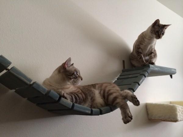140630catmock05 600x449 - 猫をダメにする「インディ・ジョーンズの吊り橋」が絶賛販売中