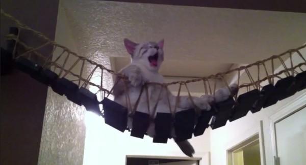 140705catbridge 600x325 - 動画で見る「インディ・ジョーンズの吊り橋」に乗る猫、全力でダメモードに