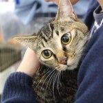 フェリシモ本社での「猫の里親譲渡会」、7月20日に10回目が開催