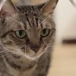 猫顔認識機能&体重計搭載の自動給餌器「Bistro」、10万ドルの支援目標を達成