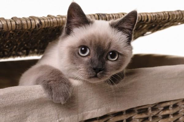 140725cat 600x398 - 本日の美人猫vol.92