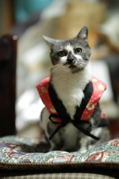 140802cat 400x600 - 本日の美人猫vol.93
