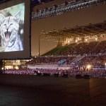 毎年恒例のインターネット猫動画フェス、今年は8月14日に開催
