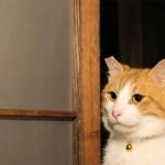 ネコ市ネコ座の「猫動画フェス」、猫も人も助かる支援をクラウドファンディングで募集