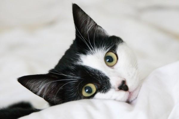 140824cat 600x399 - 本日の美人猫vol.96