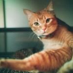 本日の美人猫vol.97