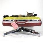 スーツケースベッドに寝そべる猫、寝心地の良さに顔を埋める