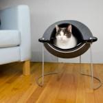真面目な顔の猫、モダンなドーム型猫ベッドにぽっかり浮かぶ