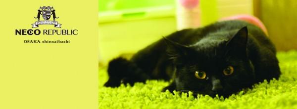141007nekorrepublicoosaka 600x222 - 猫カフェと猫保護を両立する「ネコリパブリック」、大阪・心斎橋に2号店が誕生