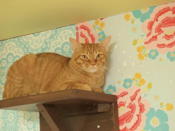 141007nekorrepublicoosaka03 600x449 - 猫カフェと猫保護を両立する「ネコリパブリック」、大阪・心斎橋に2号店が誕生