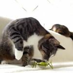リアルな虫ロボに対峙する猫、猫パンチで退治を図る