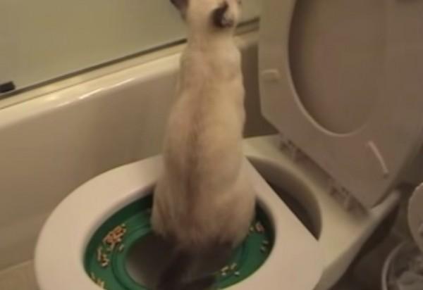 141012litterkwitter 600x412 - 訓練を重ねた猫、水洗トイレを使いこなすようになる