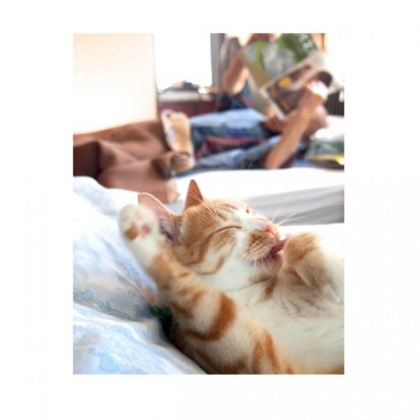 141013kinakonjiji 600x600 - ほんわか猫写真集『きなことじいじ』、出版に向けKickstarterで支援募集中