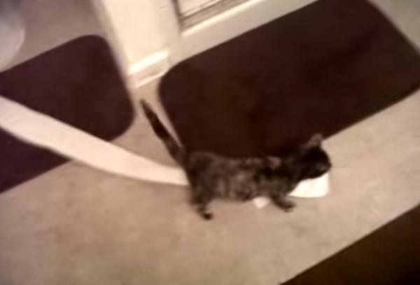 141018Hazel 600x407 - サビ猫ホームズの推理、華麗な自滅トリックを披露