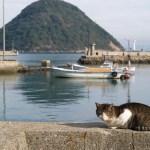 ストビューの猫、香川県多度津町の猫島・佐柳島でも観測される